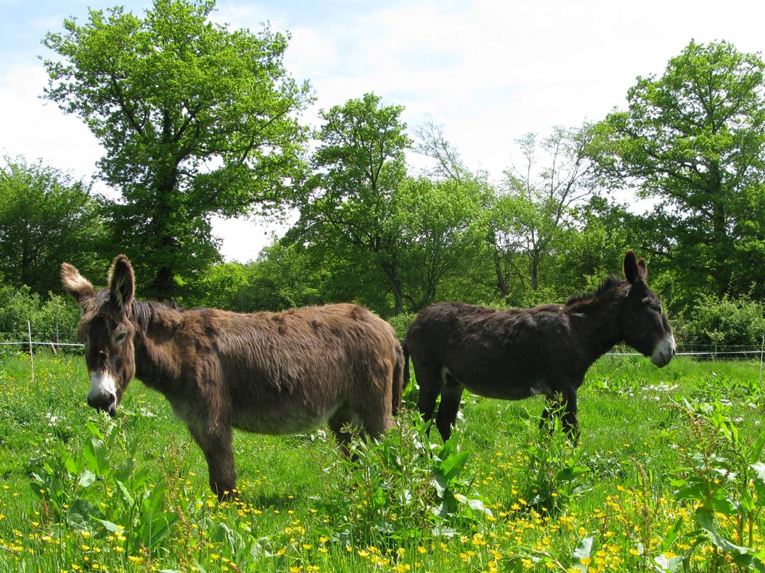 Nos ânes Vanille et Valentine
